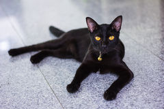 Black male cat show interest at photo camera Royalty Free Stock Photos