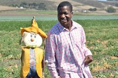 Black man in a California farm playing with a scarecrow Royalty Free Stock Photo