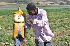 Black man in a California farm playing with a scarecrow Royalty Free Stock Photos
