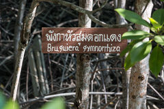 Black mangrove forest with a sign at a wetland Stock Images