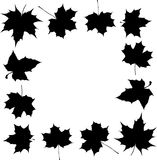 Black Maple Foliage Frame Royalty Free Stock Photo