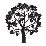 Black Maple Tree. Vector Illustration. Stock Images