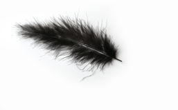 Black marabou feather on a white background Stock Images