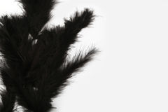 Black marabou feathers on a white background Royalty Free Stock Photos