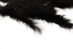 Black marabou feathers on a white background Royalty Free Stock Image