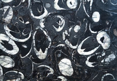 Black marble stone texture. Stock Image