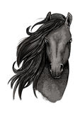 Black mare horse head sketch Stock Photography