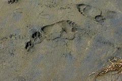 Black mark  -4. Human footprints on a black sand beach on the Black Sea in Bulgaria Stock Photos