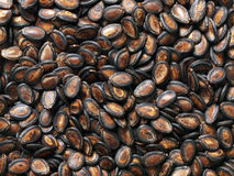 Black melon seeds Royalty Free Stock Photography