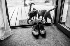Black men`s leather shoes are standing on the threshold. Two strays cat near the men`s shoes. Wedding details. Black and white pho. To Stock Photography