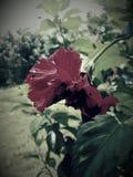 Black mirror flower royalty free stock photo