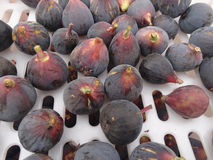 Black Mission Fig, Ficus carica 'Mission'. Popular cultivar also known as Franciscana with medium sized fruits with purple black sking and strawberry colored royalty free stock image
