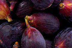 Black Mission Figs (Ficus carica) stock images