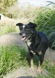 Black mixed breed dog Royalty Free Stock Photo
