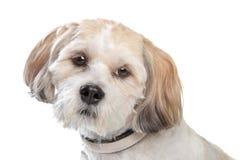Black mixed breed dog Stock Image