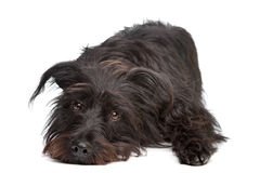 Black mixed breed dog Royalty Free Stock Photos