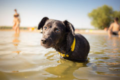 Black mixed breed dog Stock Photos