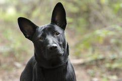 Black mixed breed stray puppy dog Stock Photo