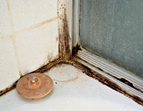 Black Mold Stock Photography
