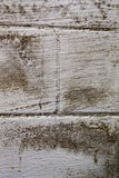 Black mold on basement wall Stock Images