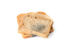 Black mold on a bread. Close-up of black mold on a bread, isolated on white royalty free stock images
