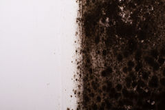 Black mould. In the corner of kitchen Royalty Free Stock Photo