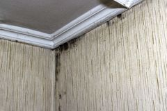 Black mold in the corner of room wall stock images