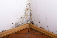 Black mould. Black mould in the corner of room wall Stock Images