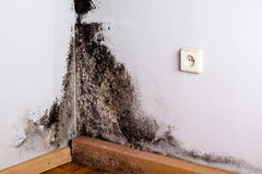 Black mould. Black mould in the corner of room wall Royalty Free Stock Photography