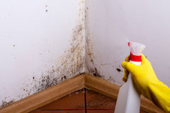 Black mould. Black mould in the corner of room wall. Preparation for mold removal Royalty Free Stock Images
