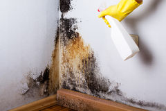 Black mould. Black mould in the corner of room wall. Preparation for mold removal Royalty Free Stock Image
