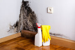 Black mould. Black mould in the corner of room wall. Preparation for mold removal Stock Image