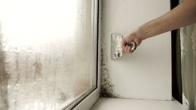 Black mold in the corner of window preparation for mold removal. stock video
