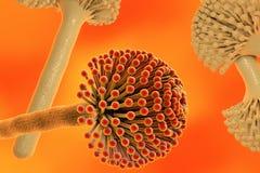 Black mold fungi. Fungi Aspergillus, black mold which produce aflatoxins and cause pulmonary infection aspergillosis, 3D illustration stock illustration