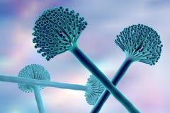 Black mold fungi. Fungi Aspergillus, black mold which produce aflatoxins and cause pulmonary infection aspergillosis, 3D illustration royalty free illustration