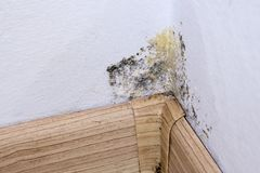 Black mold and moisture in the corner of room on white wall. Closeup. Macro Royalty Free Stock Image
