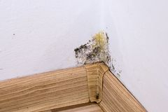 Black mold and moisture in the corner of room on white wall. Closeup. Macro Royalty Free Stock Photo