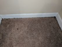 Black Mold on wall and floor stock images