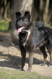 Black mongrel dog Stock Images