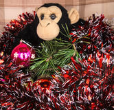Black monkey with brilliant New Year's tinsel and a brilliant ba Stock Photos