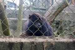 A monkey is sad in the cage. stock photo