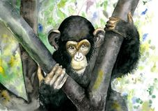Black monkey sitting on a tree. Chimpanzee. Watercolor illustration stock images