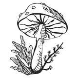 Unhealthy hand drawn stylized monochrome poisonous amanita mushroom drawing on white background.  Royalty Free Stock Photos