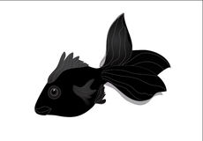 Black Moor Goldfish Stock Photo