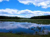 Black Moshannon Bog. Clouds reflecting off the bog at Black Moshannon State Park Stock Photography