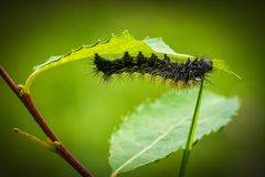 Black Moth on Green Leaf Plant Stock Images