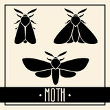 Black moths isolated on light background Royalty Free Stock Photo