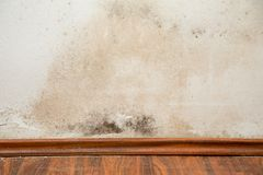 Black Mould. Buildup in the corner of an old house Royalty Free Stock Photos