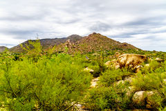 Black Mountain with Cacti and Boulders in the Arizona Desert Stock Photography