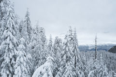Black Mountain snowshoe trail. Winter scene taken on free Black Mountain snowshoe trail in Cypress Provincial Park Stock Photography